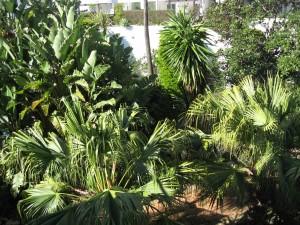 com-garden